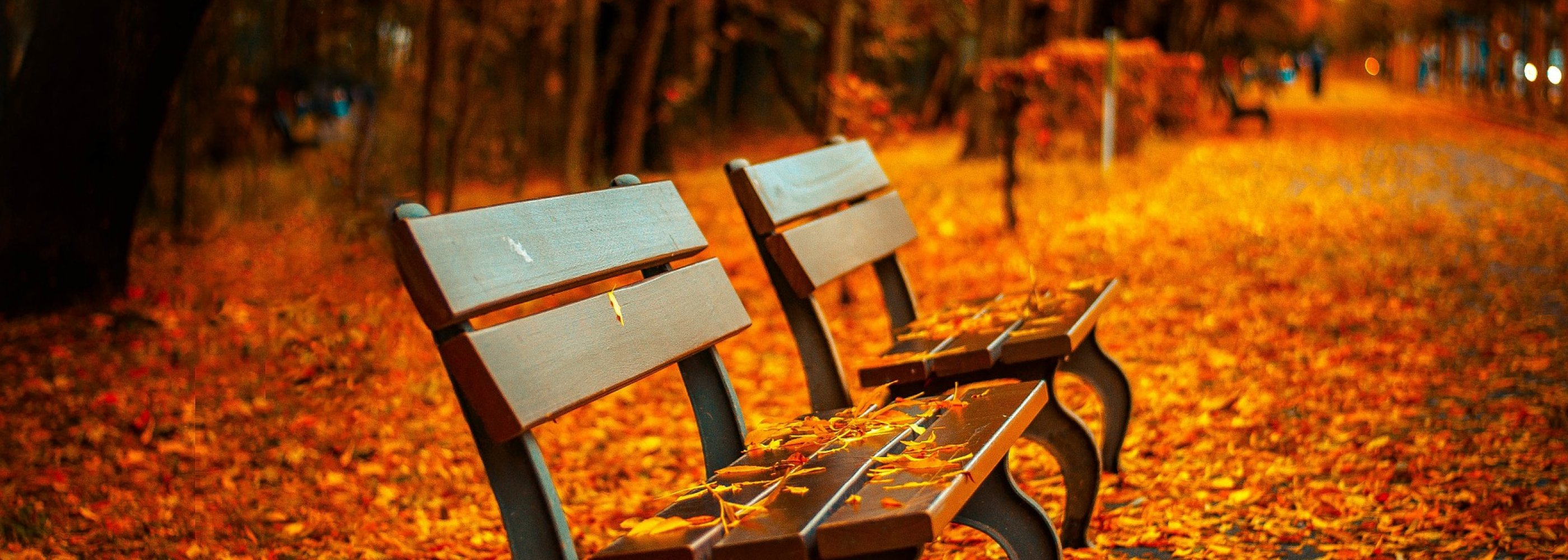Benches surrounded by leaves